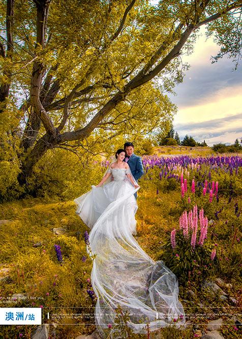 紫韵花开鲁冰梦